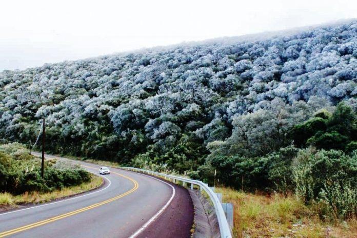 #Pracegover Na foto, rodovia com um carro, e árvores cobertas pela geada