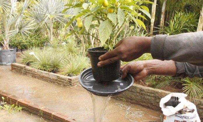 #Pracegover Na foto, mulher tira água de vaso