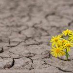 #Pracegover Foto: na imagem há flores nascendo no chão