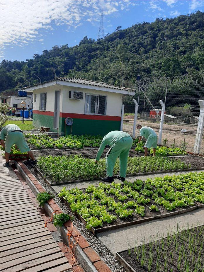 #Pracegover Foto: na imagem há pessoas. plantações e uma construção