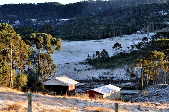 #Pracegover Na foto, paisagem serrana com pinheiros e gramado branco coberto pela geada