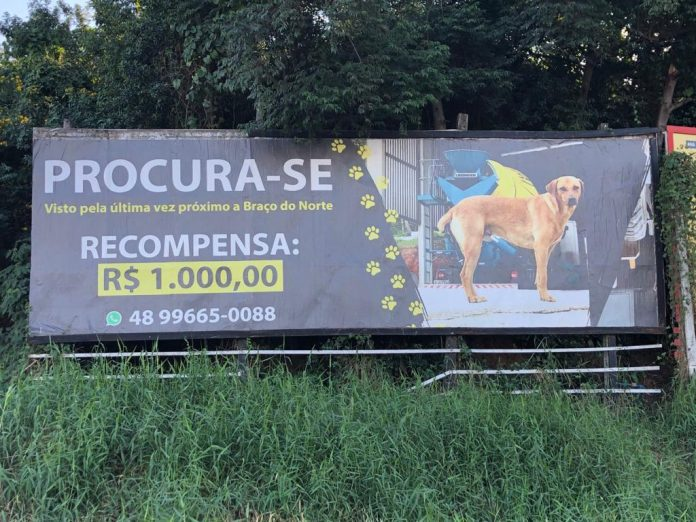 #Pracegover Foto: na imagem há um outdoor com a imagem de um cão