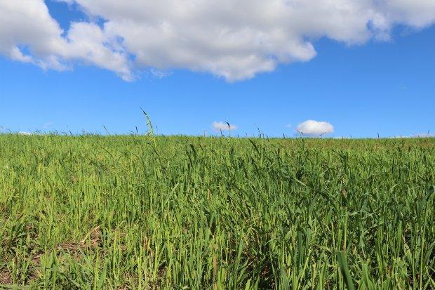 #Pracegover Foto: na imagem há uma plantação