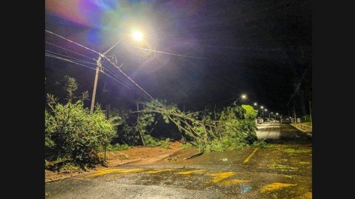 #Pracegover Na foto, árvores caídas sobre a pista