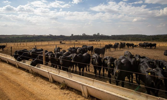 #Pracegover Foto: na imagem há bovinos, tanque para ração e um pasto