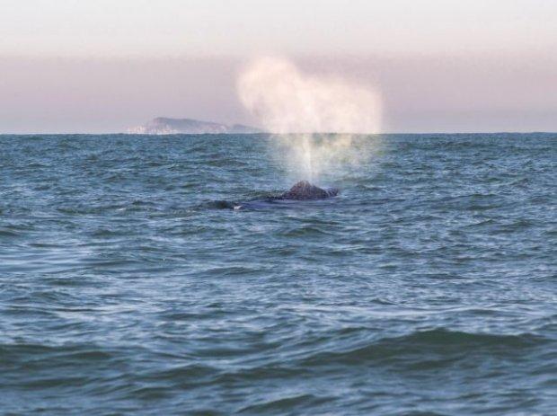 #Pracegover Foto: na imagem há o mar e uma baleia