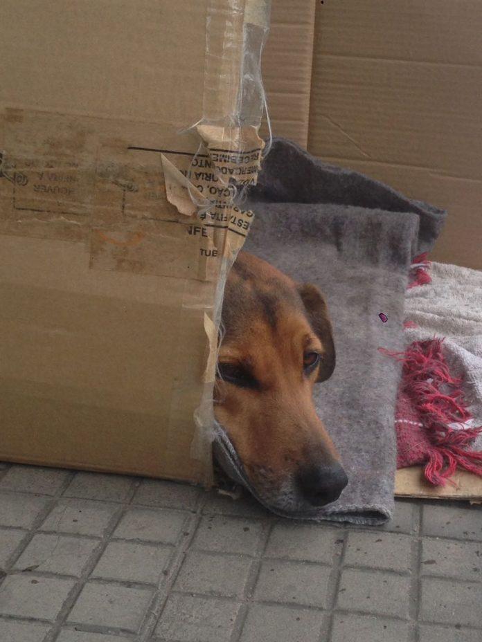 #Pracegover Foto: na imagem há um cão, uma caixa de papelão e cobertores