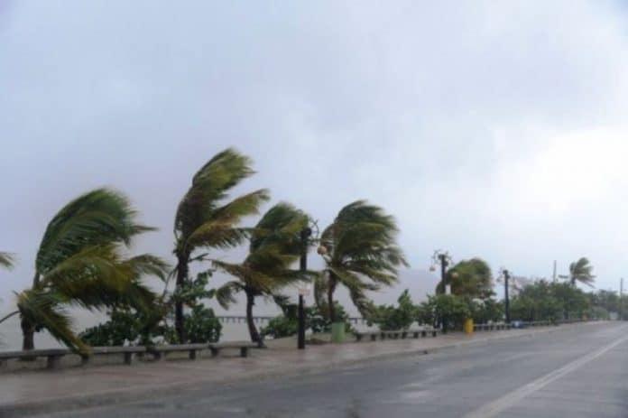 #Pracegover Na foto, árvores envergadas pela força do vento