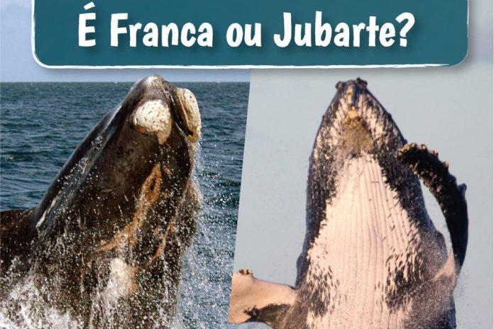 #Pracegover Na foto, à direita detalhes de uma baleia-franca e à esquerda detalhes de uma baleia-jubarte