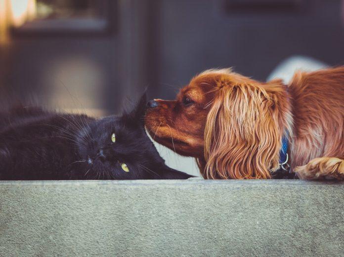 #Pracegover Na foto, um gato deitado ao lado de um cachorro