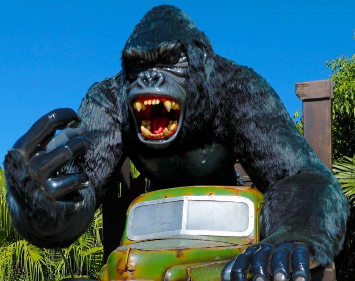 #Pracegover Foto: na imagem há um gorila e um carro de brinquedo