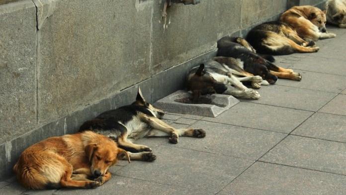 #Pracegover Na foto, cães deitado na calçada