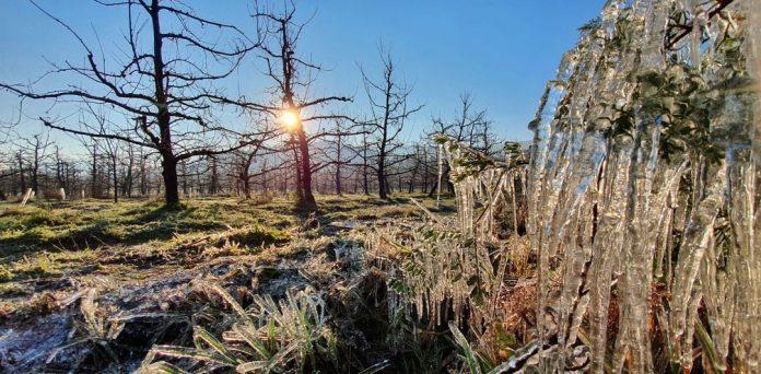 #Pracegover Foto: na imagem há árvore e uma paisagem congelada