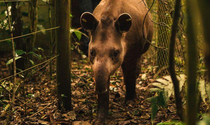 #Pracegover Foto: na imagem há um animal