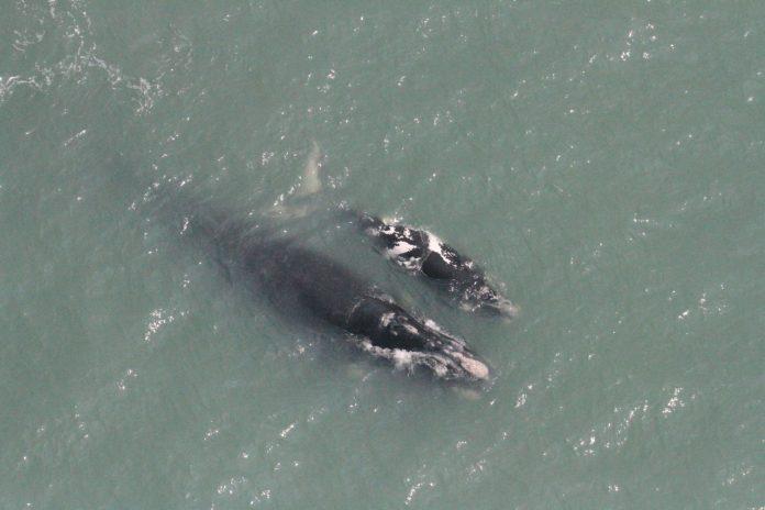 #Pracegover Foto: na imagem há o mar e baleias