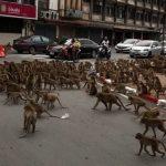 #Pracegover Na foto, macacos brigando entre carros e pessoas