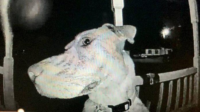 #Pracegover Na foto, cão aparece em uma câmera enquanto toca a campainha