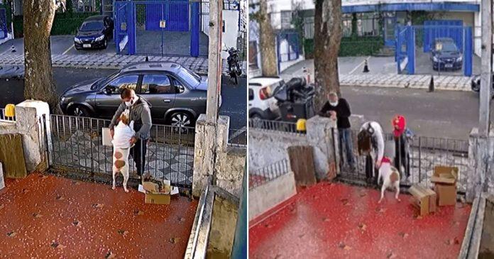 #Pracegover Na foto, à esquerda momento em que homem rouba a roupa da cachorrinha, e à direita o momento em que casal dá uma nova