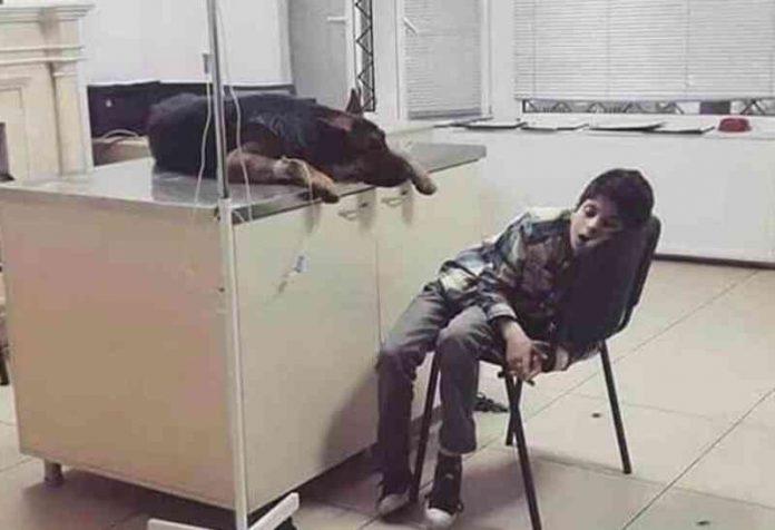 #Pracegover Foto: na imagem há uma criança, um cão, um balcão e vidro