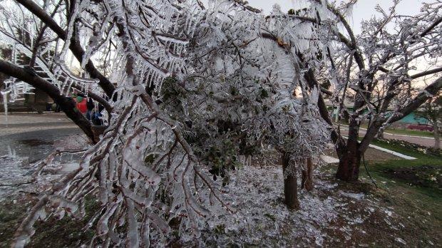 #Pracegover Na foto, uma árvore congelada