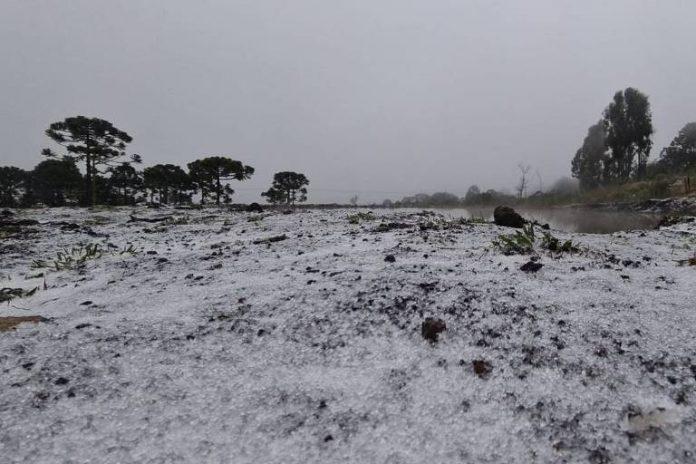 #Pracegover Foto: na imagem há árvores e neve
