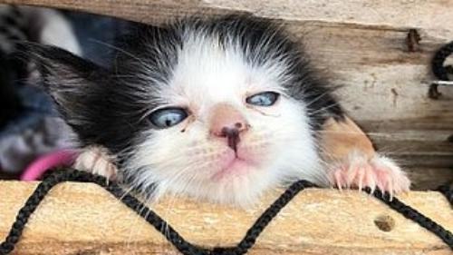 #Pracegover Na foto, gato tentando fugir do incêndio