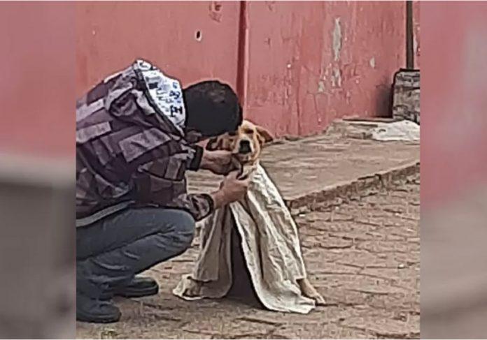 #Pracegover Na foto, homem cobre um cão com um tecido