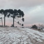 #Pracegover Foto: na imagem há uma árvore e neve