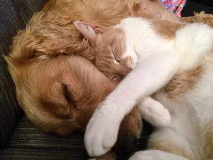 #Pracegover Foto: na imagem há dois animais, um cão e um gato