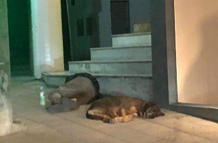 #Pracegover Na foto, morador de rua dormindo no chão ao lado de uma cachorro