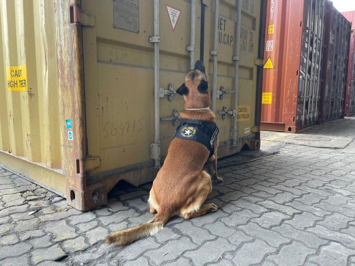 #Pracegover foto: na imagem há um cão e contêineres
