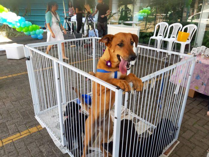 #Pracegover foto: na imagem há cães em um cercado