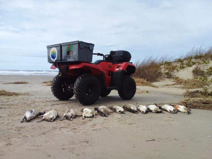 #Pracegover Foto: na imagem há pinguins e um veículo