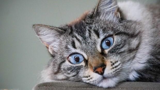 #Pracegover Na foto, close de um gato