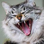 #Pracegover foto: na imagem há um gato