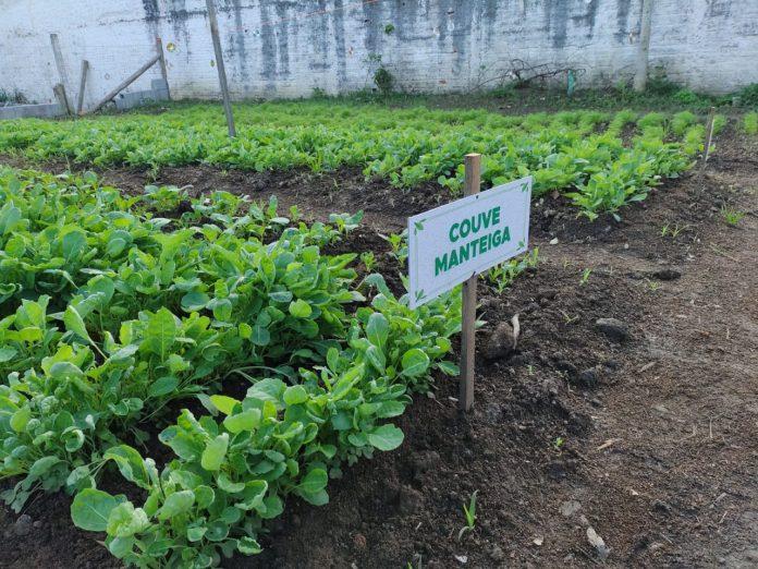 #Pracegover foto: na imagem há mudas de hortaliças, placa e terra