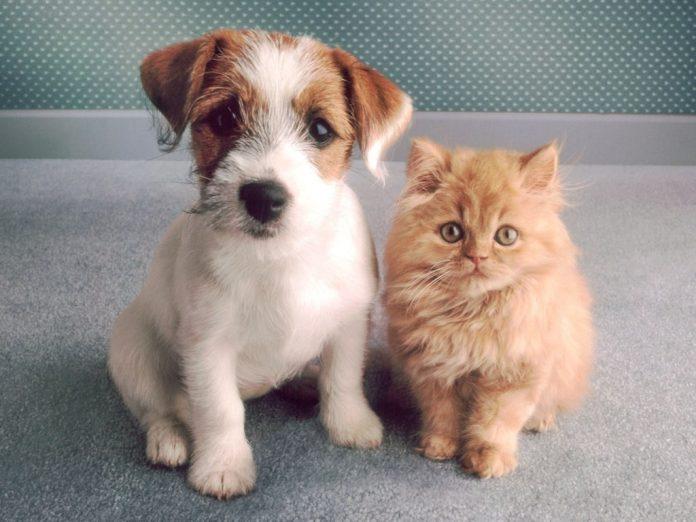 #Pracegover foto: na imagem há um cão e um gato