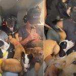 #Pracegover foto: na imagem há cães e uma pessoa